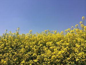 写真 2.JPG hana1