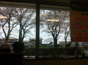 オフィスから花見