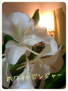 2013-09-02-23-17-53_deco.jpg