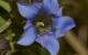阿蘇の希少植物とブルービー