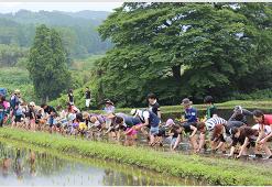 6月15日田植えに80名が参加!