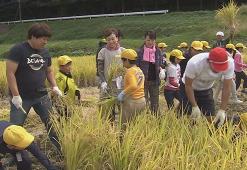 10月14日稲刈りを実施